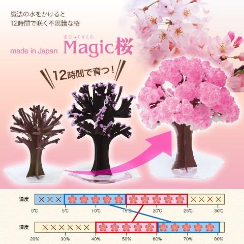 【OTOGINO】Magic桜 スタンダード